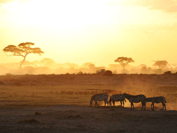 africa-safari-zebra-sunrise-