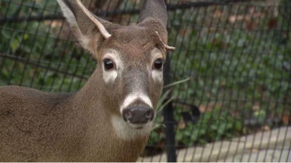 deer-in-harlem2